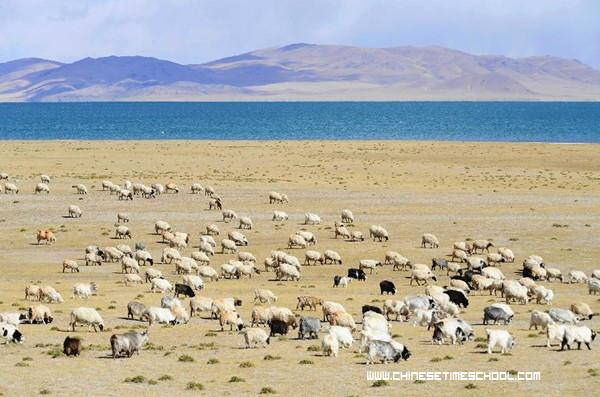 nagqu chatrooms Or chat with an export live chat back to  home  tibet travel permit  nyingchi, and nagqu, and eastern tibet.