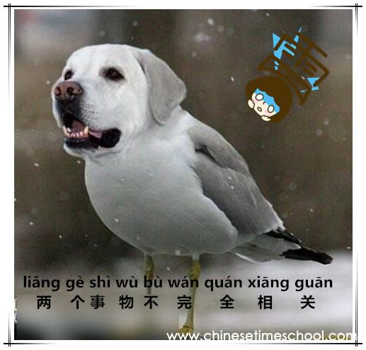 learn chinese���������� life slang learn chinese slang